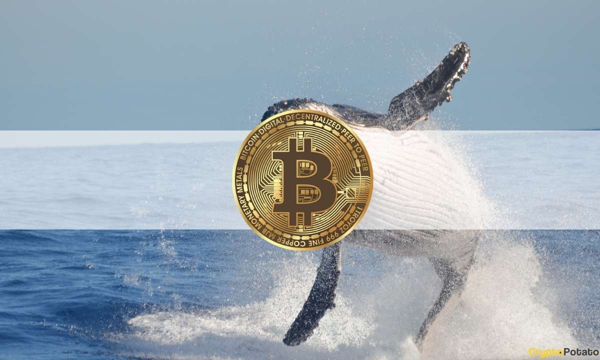 Realizing Profits or Reducing Risk? Third-Largest Bitcoin Whale Just Sold 1,500 BTC at $54.3K